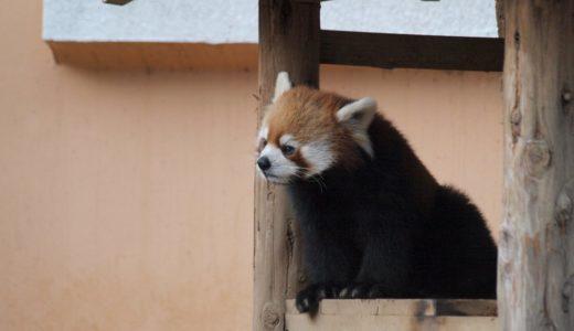【千葉市若葉区】格安望遠レンズ1本持って千葉市動物公園に行ってきた