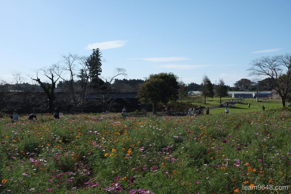 富田さとにわ耕園 X-H1作例