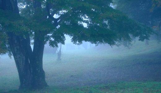 千葉の雲海スポット(鹿野山九十九谷展望公園)を撮影に行き、想像以上の霧に包まれてきた