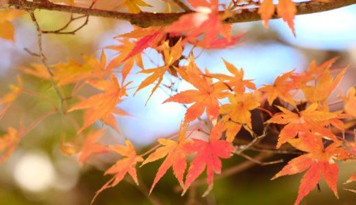 タムキューを持って泉自然公園に遊びに行った。紅葉が丁度見頃です。
