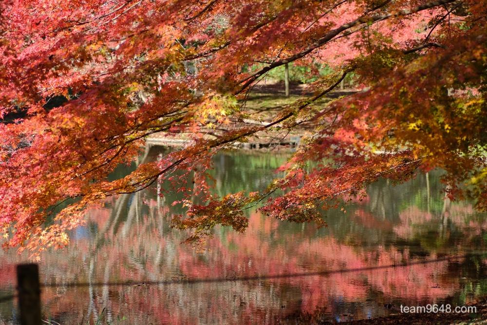 泉自然公園 X-H1 紅葉