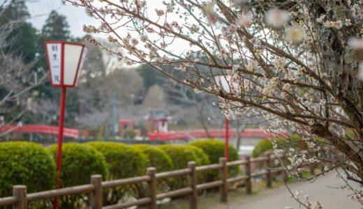2月の茂原公園で梅の花を撮ってきた。(FUJIFILM X-H1 / XF35mm F1.4)【動画あり】