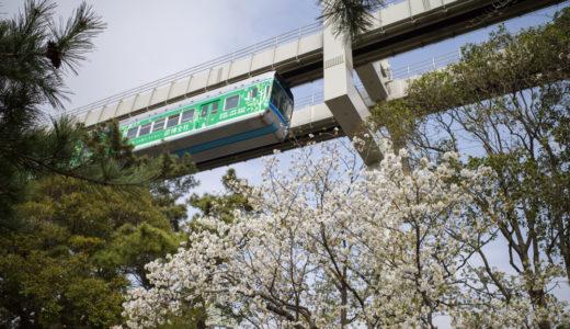千葉公園で桜を見たりボートに乗ったりと遊んできた。(2019/3/30の桜)