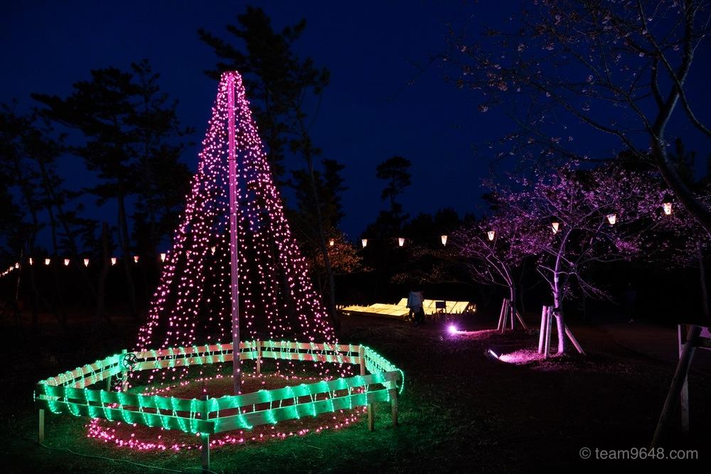 しらこ温泉桜祭り ライトアップ
