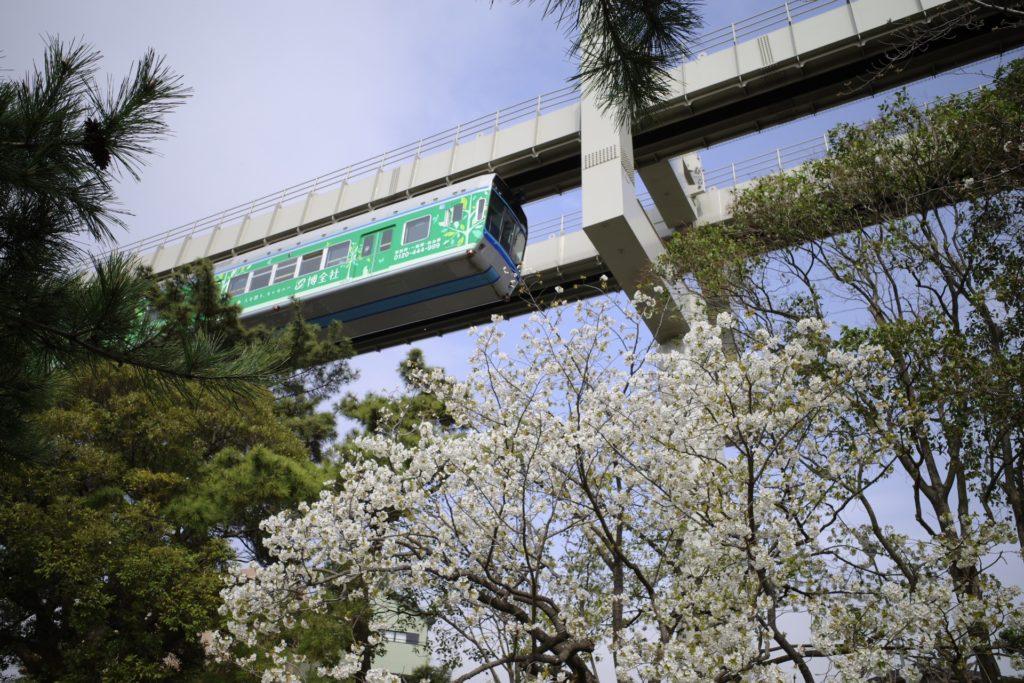 GR3 桜 千葉公園