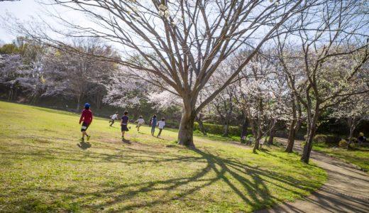 RICOH GR3で撮る桜(2019)