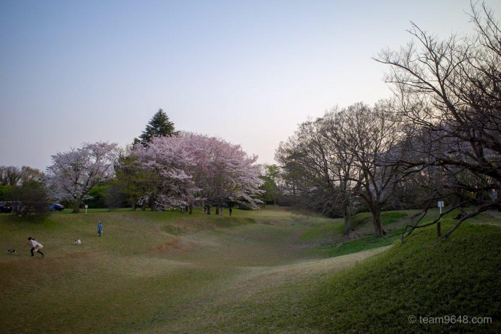 GR3 桜 佐倉城址公園