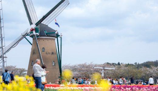 佐倉チューリップフェスタ2019に行ってきた。オランダ風車とチューリップの共演が最高!