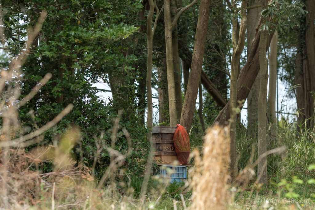 富田さとにわ耕園 養蜂