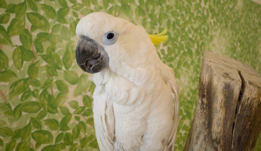 【千葉県印西市の屋内動物園】Moffアニマルワールドで沢山の動物や鳥と遊んできた。