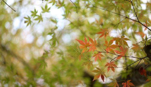 2019年11月上旬の千葉。 まだ紅葉には早かった。(Nikon Z6 / Micro-NIKKOR 105mm f/2.8G)