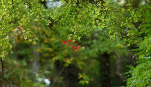 2019年11月中旬の成田。紅葉がいい具合。(Nikon Z6 / NIKKOR Z 85mm f/1.8 S)